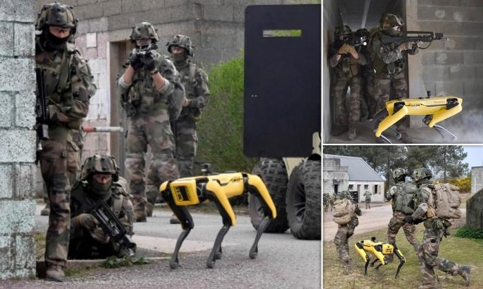 """""""Boston Dynamics""""in robot itləri döyüş ssenarilərində sınaqdan keçirilir -  FOTOLAR"""